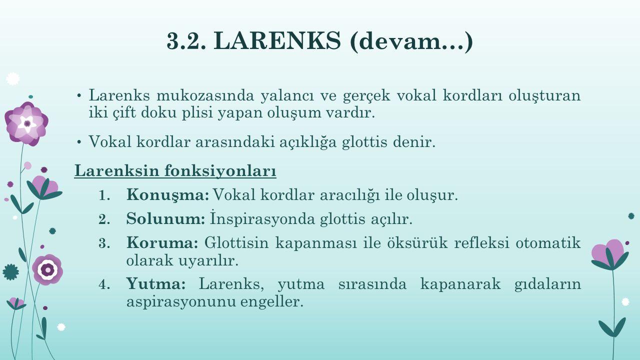 3.2. LARENKS (devam…) Larenks mukozasında yalancı ve gerçek vokal kordları oluşturan iki çift doku plisi yapan oluşum vardır. Vokal kordlar arasındaki