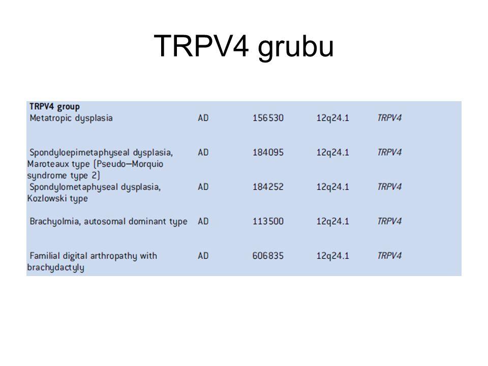 TRPV4 grubu