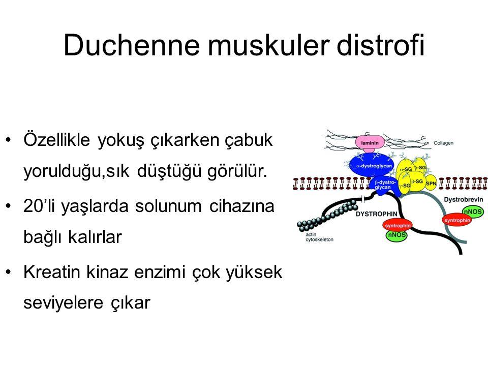 Duchenne muskuler distrofi Özellikle yokuş çıkarken çabuk yorulduğu,sık düştüğü görülür. 20'li yaşlarda solunum cihazına bağlı kalırlar Kreatin kinaz