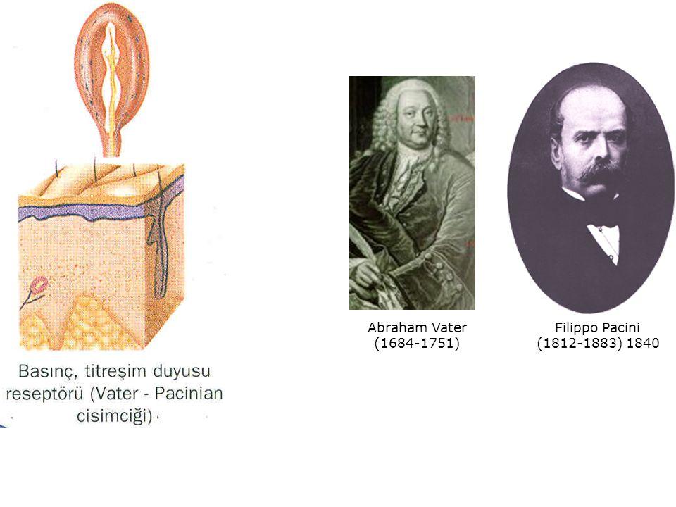 Filippo Pacini (1812-1883) 1840 Abraham Vater (1684-1751)