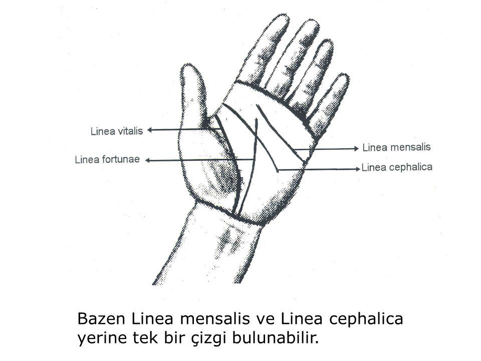 Bazen Linea mensalis ve Linea cephalica yerine tek bir çizgi bulunabilir.