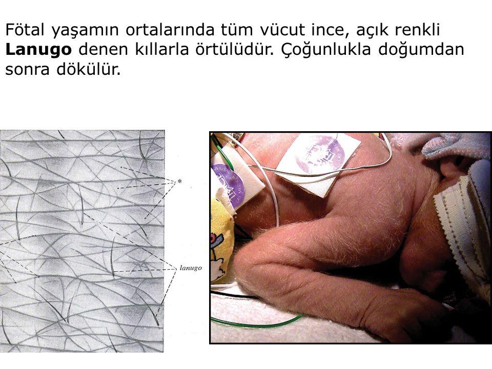Fötal yaşamın ortalarında tüm vücut ince, açık renkli Lanugo denen kıllarla örtülüdür. Çoğunlukla doğumdan sonra dökülür.