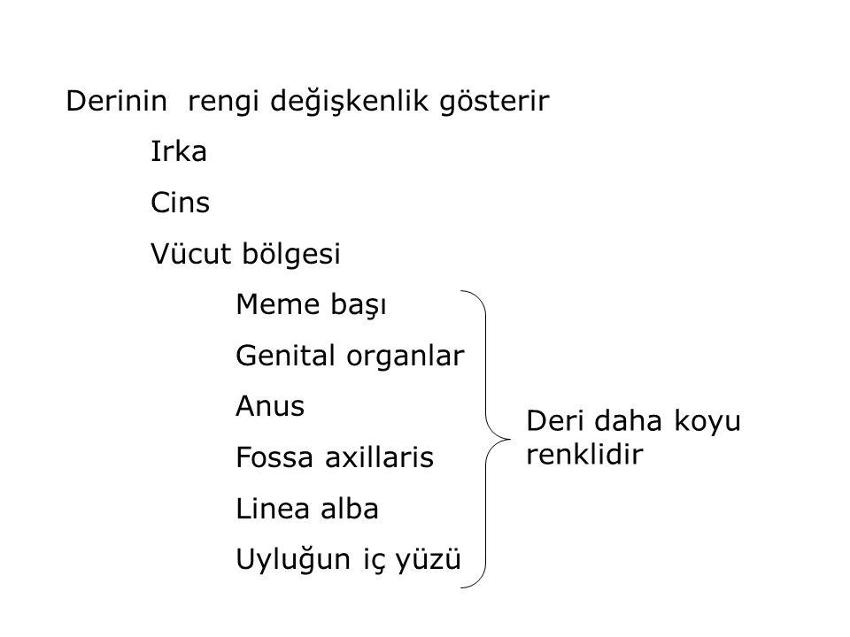 MAMMA (Meme) ve GL.MAMMARIA (Meme bezleri) Her iki cinste de bulunur.