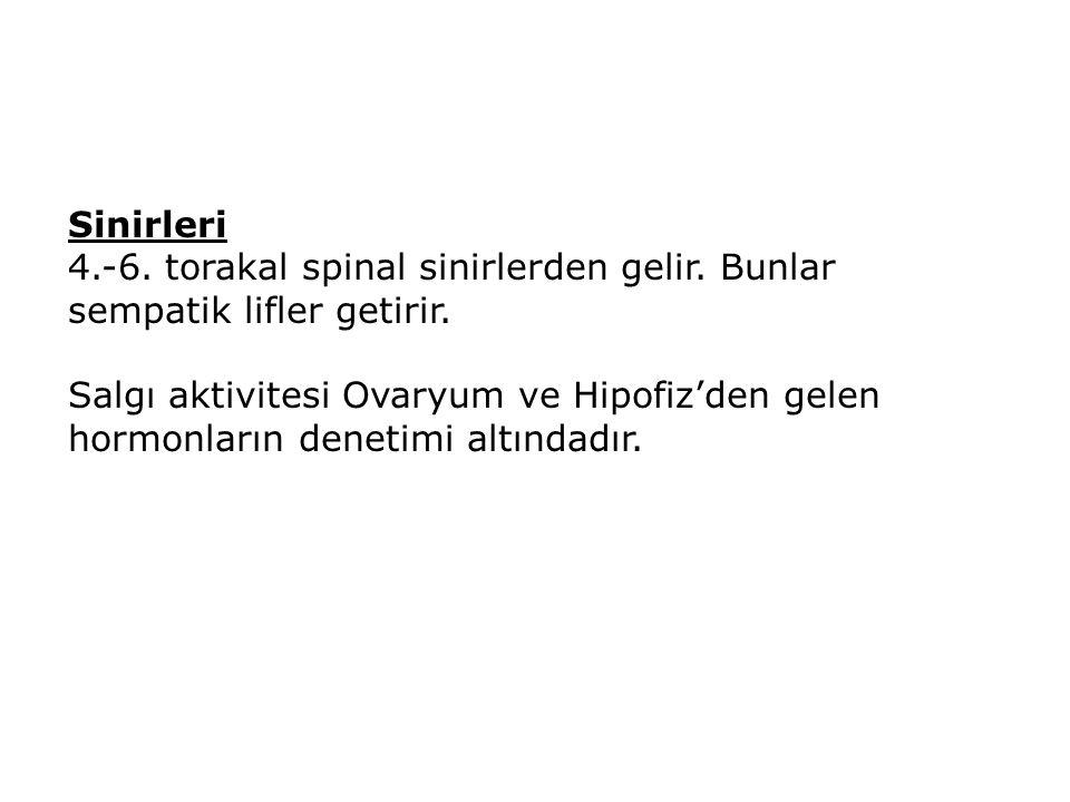 Sinirleri 4.-6. torakal spinal sinirlerden gelir. Bunlar sempatik lifler getirir. Salgı aktivitesi Ovaryum ve Hipofiz'den gelen hormonların denetimi a