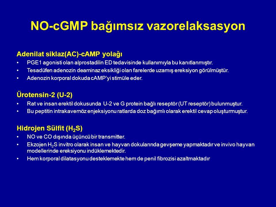 Adenilat siklaz(AC)-cAMP yolağı PGE1 agonisti olan alprostadilin ED tedavisinde kullanımıyla bu kanıtlanmıştır.