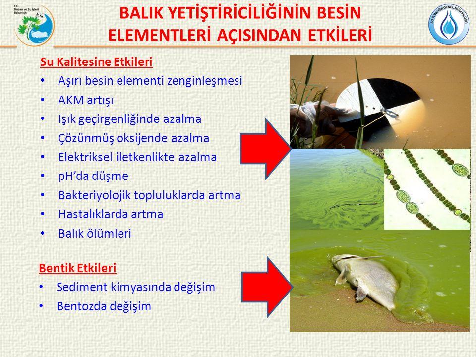 BALIK YETİŞTİRİCİLİĞİNİN BESİN ELEMENTLERİ AÇISINDAN ETKİLERİ Su Kalitesine Etkileri Aşırı besin elementi zenginleşmesi AKM artışı Işık geçirgenliğinde azalma Çözünmüş oksijende azalma Elektriksel iletkenlikte azalma pH'da düşme Bakteriyolojik topluluklarda artma Hastalıklarda artma Balık ölümleri Bentik Etkileri Sediment kimyasında değişim Bentozda değişim