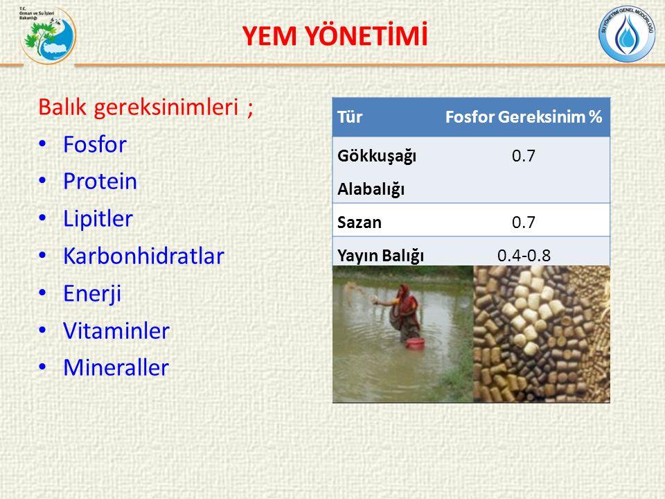 YEM YÖNETİMİ Balık gereksinimleri ; Fosfor Protein Lipitler Karbonhidratlar Enerji Vitaminler Mineraller TürFosfor Gereksinim % Gökkuşağı Alabalığı 0.7 Sazan0.7 Yayın Balığı0.4-0.8