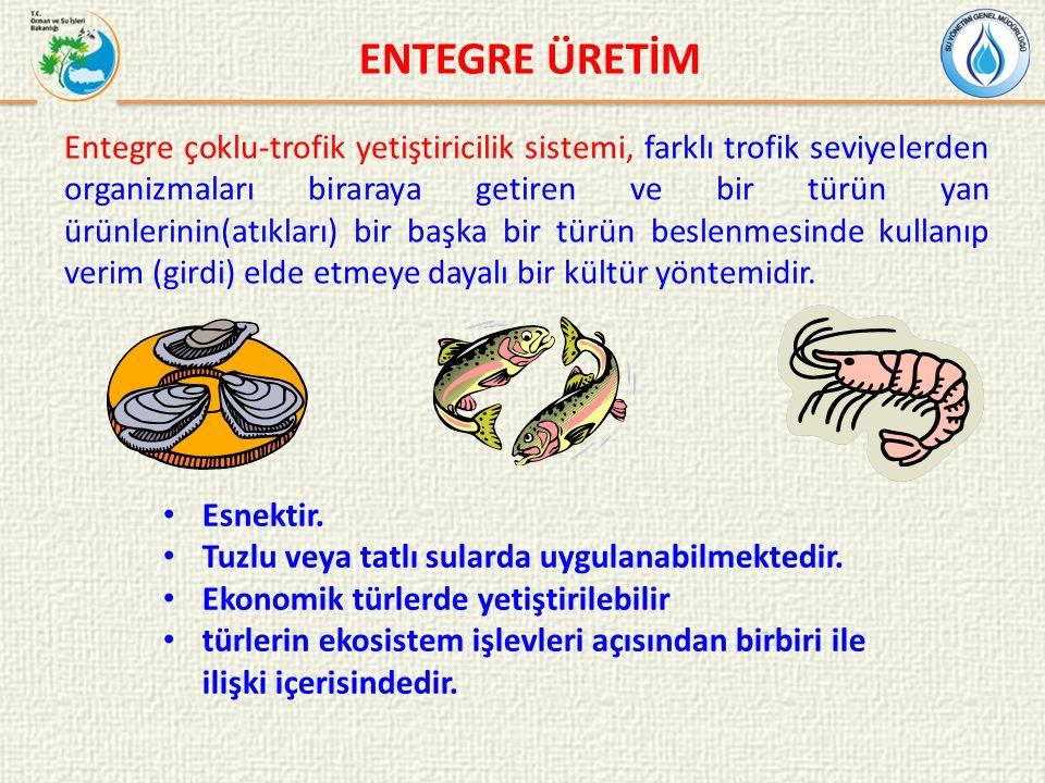 ENTEGRE ÜRETİM Entegre çoklu-trofik yetiştiricilik sistemi, farklı trofik seviyelerden organizmaları biraraya getiren ve bir türün yan ürünlerinin(atıkları) bir başka bir türün beslenmesinde kullanıp verim (girdi) elde etmeye dayalı bir kültür yöntemidir.