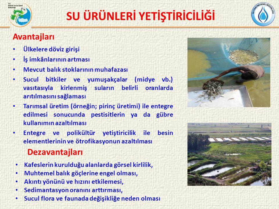 Ülkelere döviz girişi İş imkânlarının artması Mevcut balık stoklarının muhafazası Sucul bitkiler ve yumuşakçalar (midye vb.) vasıtasıyla kirlenmiş suların belirli oranlarda arıtılmasını sağlaması Tarımsal üretim (örneğin; pirinç üretimi) ile entegre edilmesi sonucunda pestisitlerin ya da gübre kullanımın azaltılması Entegre ve polikültür yetiştiricilik ile besin elementlerinin ve ötrofikasyonun azaltılması SU ÜRÜNLERİ YETİŞTİRİCİLİĞİ Avantajları Kafeslerin kurulduğu alanlarda görsel kirlilik, Muhtemel balık göçlerine engel olması, Akıntı yönünü ve hızını etkilemesi, Sedimantasyon oranını arttırması, Sucul flora ve faunada değişikliğe neden olması Dezavantajları