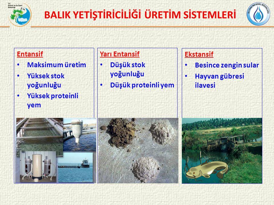 Öneriler Çevresel yönetimin sisteminin geliştirilmesi Balık yetiştiricilik tesislerinin kurulduğu/kurulacağı su alanlarında su kalitesi izleme programlarının oluşturulması Yem mevzuatının geliştirilmesi Balık yetiştiriciliği tesisleri için iyi yönetim uygulamaların geliştirilmesi ve uygulanması Balık yetiştiriciliği ar-ge çalışmalarının desteklenmesi ve önceliklendirilmesi Kafeslerde rotasyonun sağlanması kafeslerde rotasyonun sağlanması Balık yetiştiriciliği için çevresel odaklı stratejik planların hazırlanması