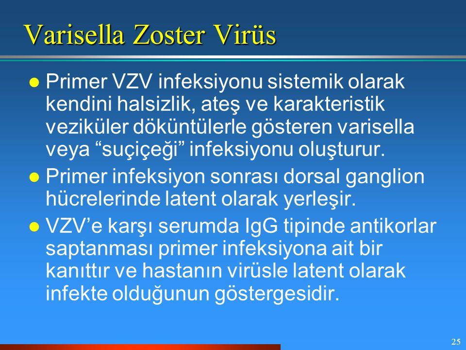 25 Varisella Zoster Virüs Primer VZV infeksiyonu sistemik olarak kendini halsizlik, ateş ve karakteristik veziküler döküntülerle gösteren varisella ve