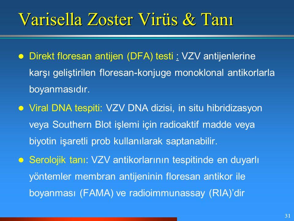 31 Varisella Zoster Virüs & Tanı Direkt floresan antijen (DFA) testi : VZV antijenlerine karşı geliştirilen floresan-konjuge monoklonal antikorlarla b