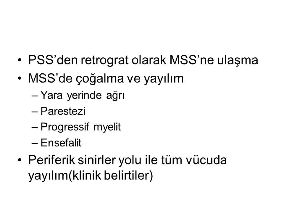 PSS'den retrograt olarak MSS'ne ulaşma MSS'de çoğalma ve yayılım –Yara yerinde ağrı –Parestezi –Progressif myelit –Ensefalit Periferik sinirler yolu i