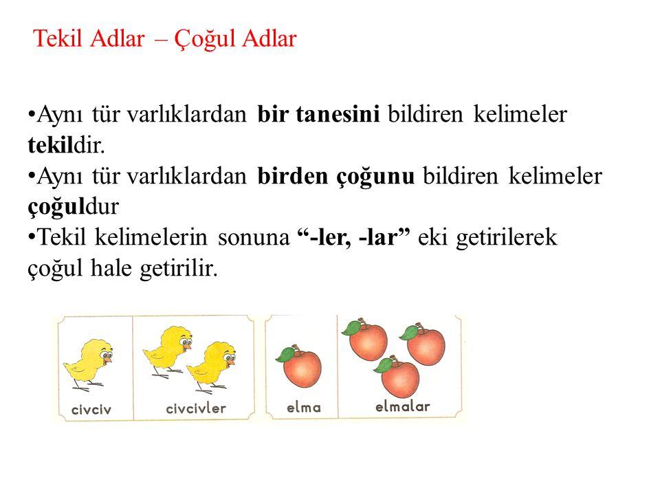 Tekil Adlar – Çoğul Adlar Aynı tür varlıklardan bir tanesini bildiren kelimeler tekildir. A ynı tür varlıklardan birden çoğunu bildiren kelimeler çoğu