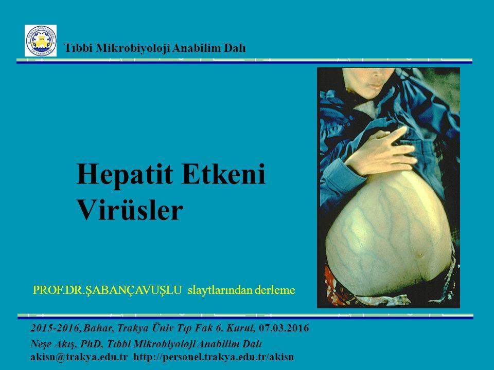 HBV enfeksiyonu ile aynı Hepatit D Virus Bulaşma