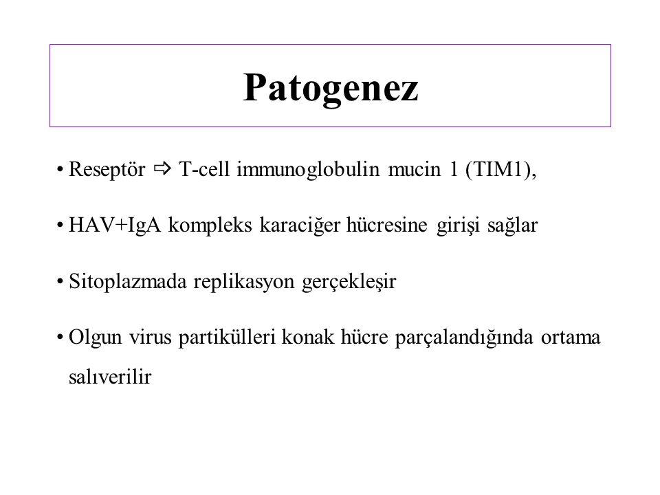 Patogenez Reseptör  T-cell immunoglobulin mucin 1 (TIM1), HAV+IgA kompleks karaciğer hücresine girişi sağlar Sitoplazmada replikasyon gerçekleşir Olgun virus partikülleri konak hücre parçalandığında ortama salıverilir
