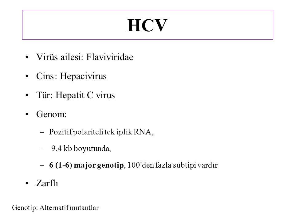 HCV Virüs ailesi: Flaviviridae Cins: Hepacivirus Tür: Hepatit C virus Genom: –Pozitif polariteli tek iplik RNA, – 9,4 kb boyutunda, –6 (1-6) major genotip, 100'den fazla subtipi vardır Zarflı Genotip: Alternatif mutantlar
