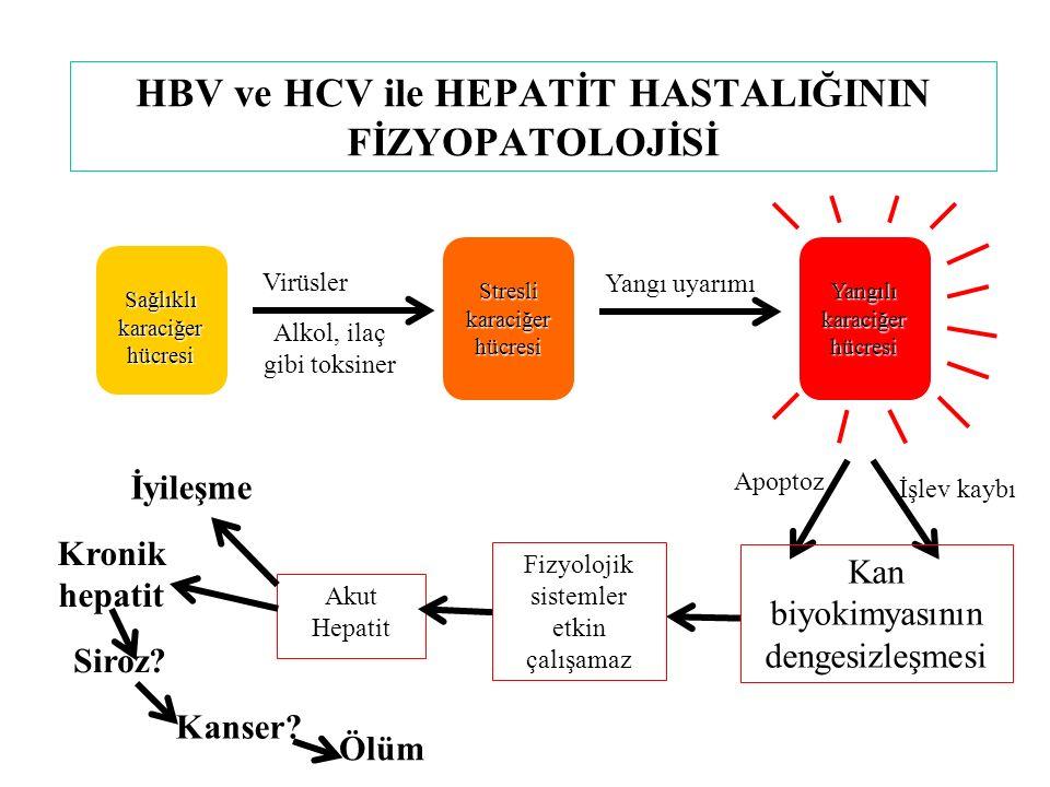 HBV ve HCV ile HEPATİT HASTALIĞININ FİZYOPATOLOJİSİ Akut Hepatit Sağlıklı karaciğer hücresi Virüsler Alkol, ilaç gibi toksiner Stresli karaciğer hücre