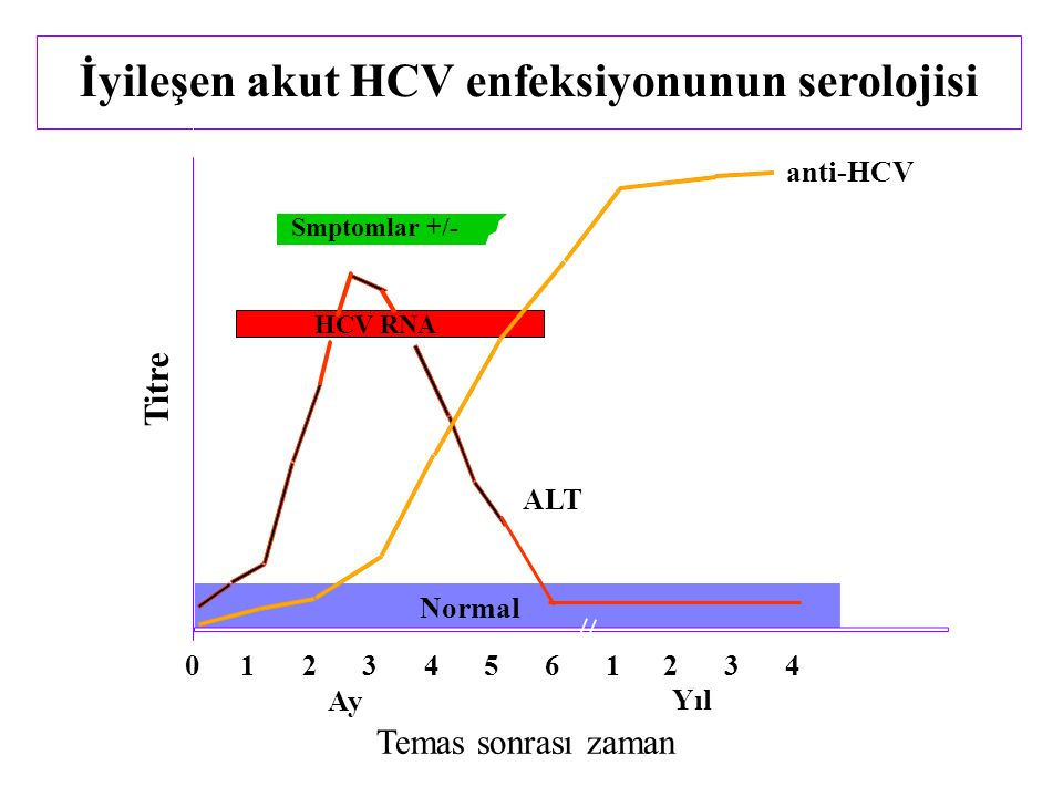 İyileşen akut HCV enfeksiyonunun serolojisi Smptomlar +/- Temas sonrası zaman Titre anti-HCV ALT Normal 012345 61234 Yıl Ay HCV RNA