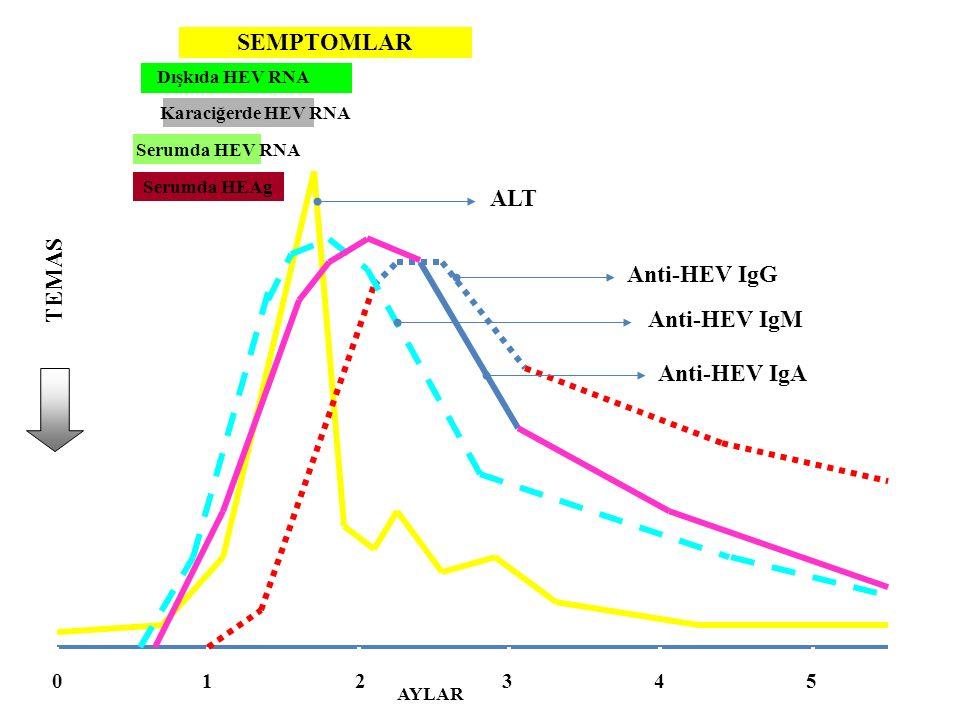 SEMPTOMLAR Dışkıda HEV RNA Karaciğerde HEV RNA Serumda HEV RNA ALT Anti-HEV IgM Anti-HEV IgG Anti-HEV IgA 012345 AYLAR TEMAS Serumda HEAg
