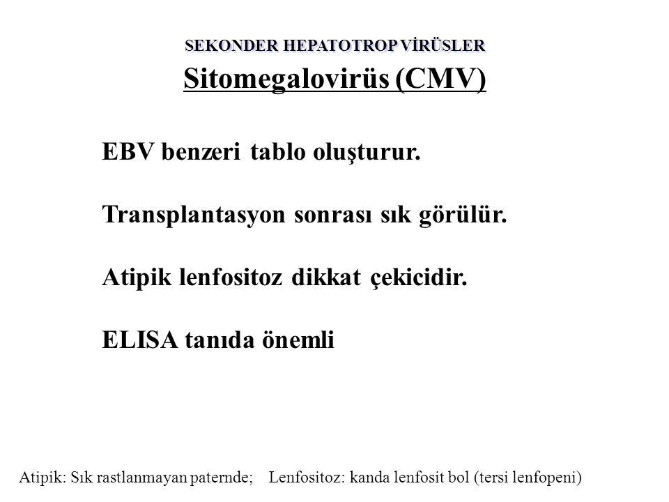 SEKONDER HEPATOTROP VİRÜSLER Sitomegalovirüs (CMV) EBV benzeri tablo oluşturur. Transplantasyon sonrası sık görülür. Atipik lenfositoz dikkat çekicidi