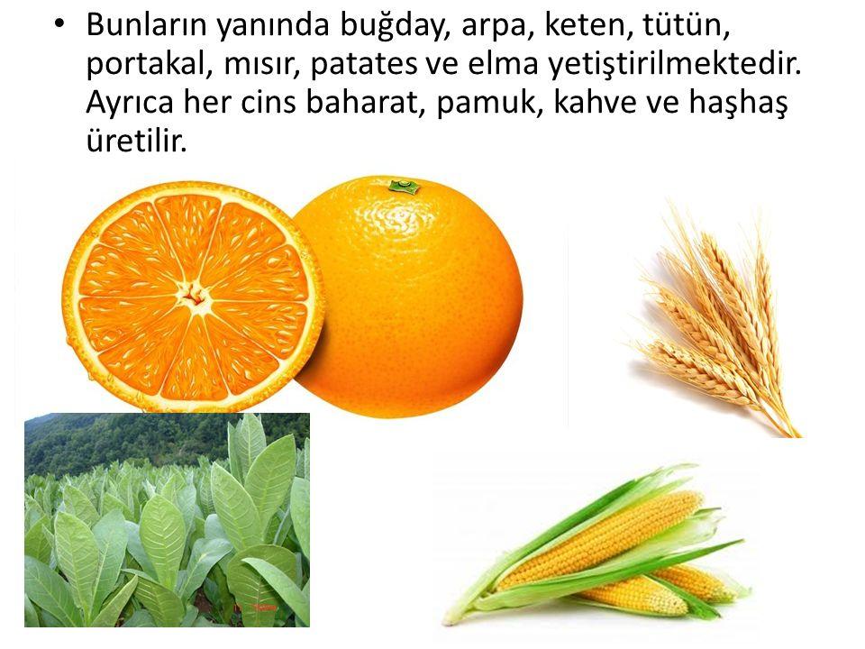 Bunların yanında buğday, arpa, keten, tütün, portakal, mısır, patates ve elma yetiştirilmektedir. Ayrıca her cins baharat, pamuk, kahve ve haşhaş üret