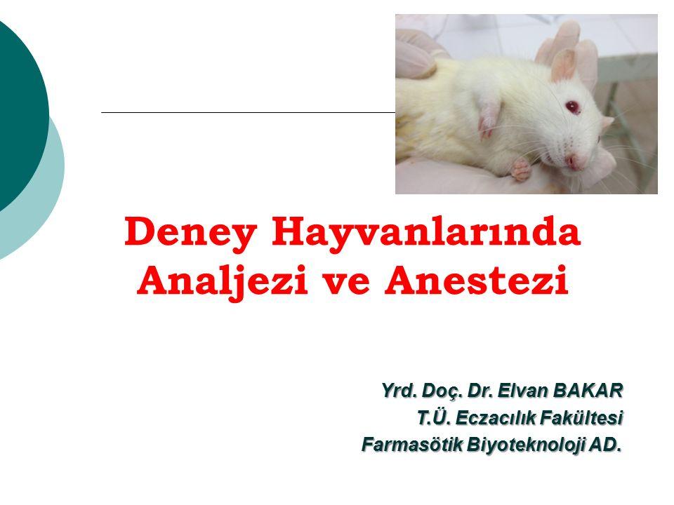 İÇERİK İyi bir analjezi ve anestezi için temel şartlar ve ağrının değerlendirilmesi Analjezi ve anestezi Premedikasyon Operasyon sonrası bakım Sık kullanılan deney hayvanlarında anestezi dozları