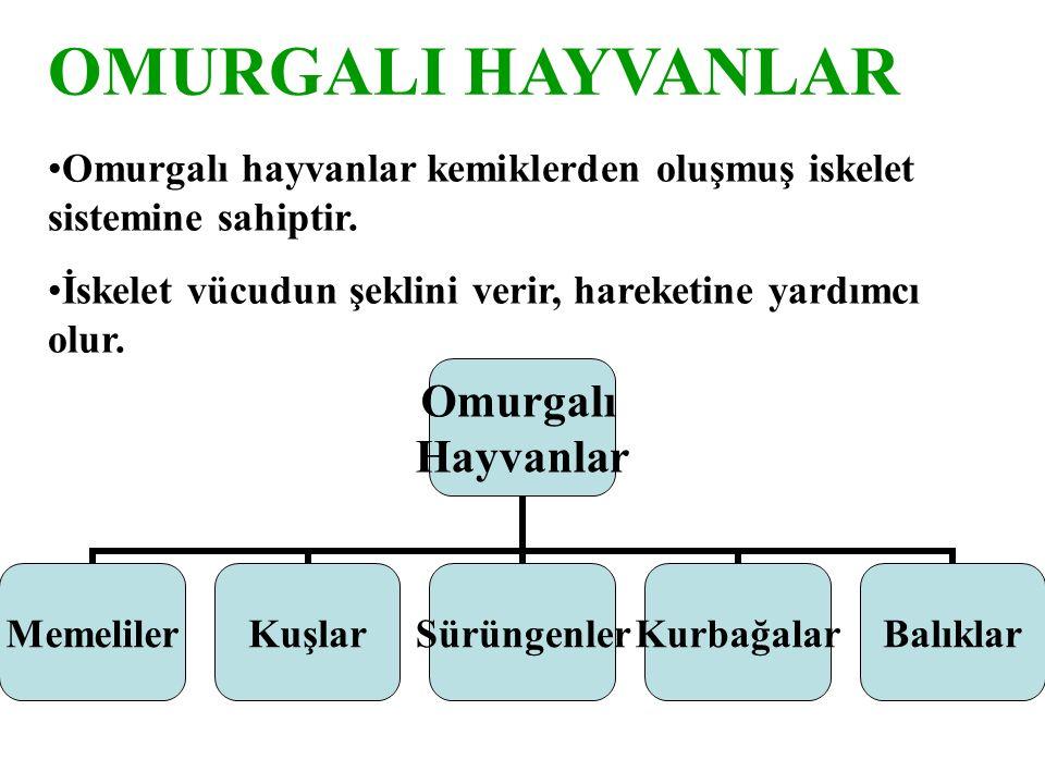 OMURGALI HAYVANLAR Omurgalı hayvanlar kemiklerden oluşmuş iskelet sistemine sahiptir.