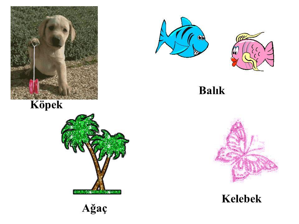 Köpek Balık Ağaç Kelebek