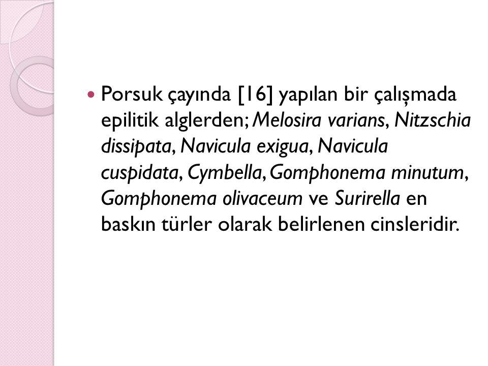 Porsuk çayında [16] yapılan bir çalışmada epilitik alglerden; Melosira varians, Nitzschia dissipata, Navicula exigua, Navicula cuspidata, Cymbella, Go