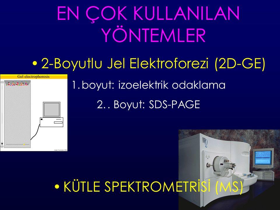 EN ÇOK KULLANILAN YÖNTEMLER 2-Boyutlu Jel Elektroforezi (2D-GE) 1.boyut: izoelektrik odaklama 2..
