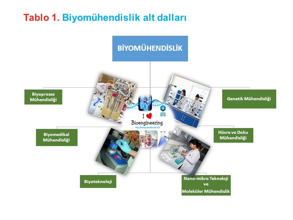 Biyoproses Mühendisliği; Dayanıklı bitkilerin geliştirilmesi, üretilmesi(GDO), Biyomalzeme geliştirilmesi, Yarı-yapay organların geliştirilmesi, Kanser araştırmaları… Biyomedikal Mühendisliği; Zararlı atıkların mikroorganizmalar ile parçalanması, Probiyotik ürünlerin üretilmesi ve geliştirilmesi, Mikroorganizmalar ile alkol üretimi ve araştırmaları, Biyodizel üretimi… Biyosensör geliştirilmesi, Yapay organ ve implantların geliştirilmesi, Polimer-hücre etkileşimleri… Hücre ve Doku Mühendisliği; www.adanabtu.edu.tr 07