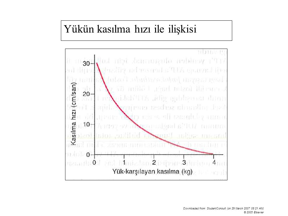 Downloaded from: StudentConsult (on 29 March 2007 08:21 AM) © 2005 Elsevier Yükün kasılma hızı ile ilişkisi