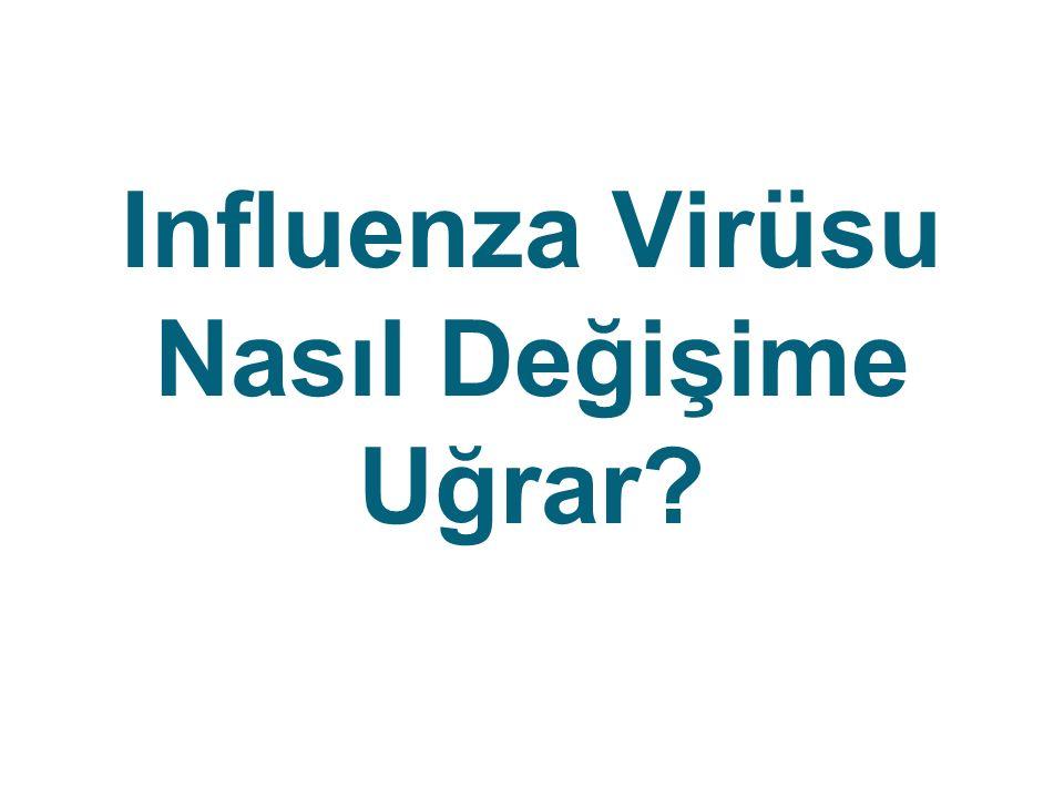 Influenza Virüsu Nasıl Değişime Uğrar?