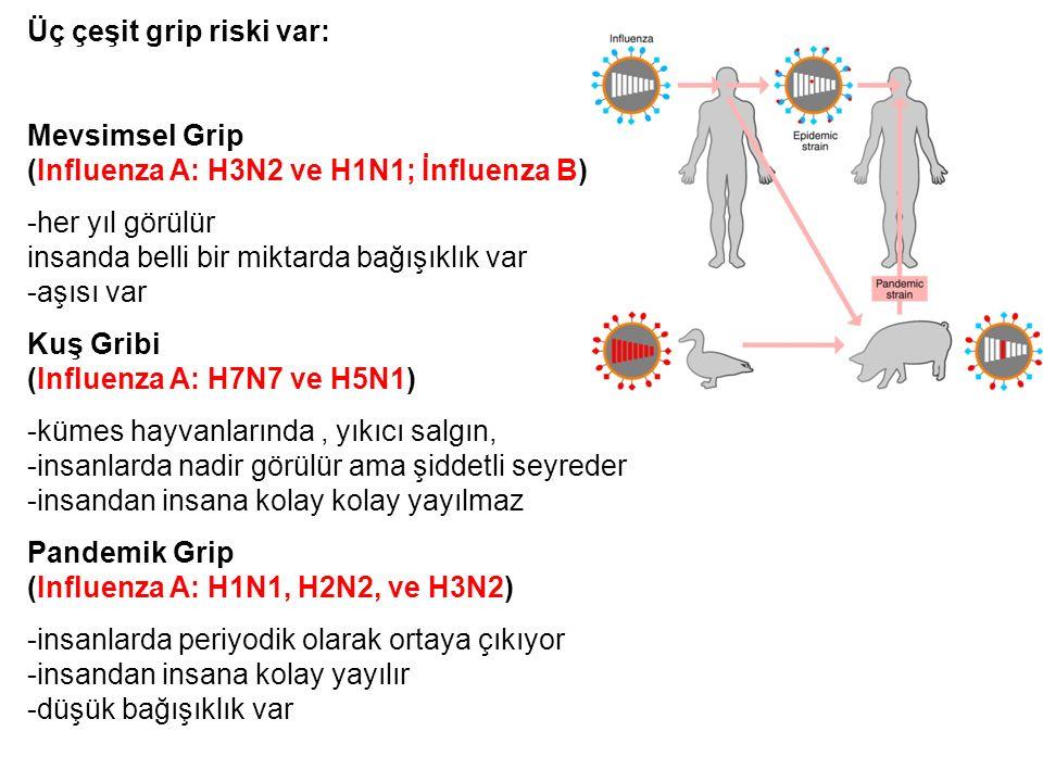 Üç çeşit grip riski var: Mevsimsel Grip (Influenza A: H3N2 ve H1N1; İnfluenza B) -her yıl görülür - insanda belli bir miktarda bağışıklık var -aşısı var Kuş Gribi (Influenza A: H7N7 ve H5N1) -kümes hayvanlarında, yıkıcı salgın, -insanlarda nadir görülür ama şiddetli seyreder -insandan insana kolay kolay yayılmaz Pandemik Grip (Influenza A: H1N1, H2N2, ve H3N2) -insanlarda periyodik olarak ortaya çıkıyor -insandan insana kolay yayılır -düşük bağışıklık var