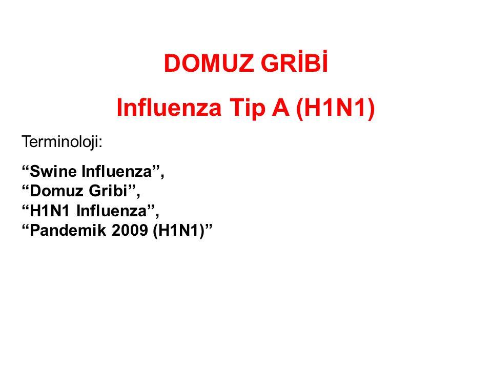 DOMUZ GRİBİ Influenza Tip A (H1N1) Terminoloji: Swine Influenza , Domuz Gribi , H1N1 Influenza , Pandemik 2009 (H1N1)