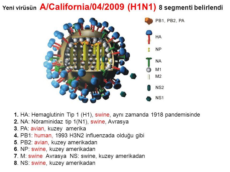 1. HA: Hemaglutinin Tip 1 (H1), swine, aynı zamanda 1918 pandemisinde 2. NA: Nöraminidaz tip 1(N1), swine, Avrasya 3. PA: avian, kuzey amerika 4. PB1: