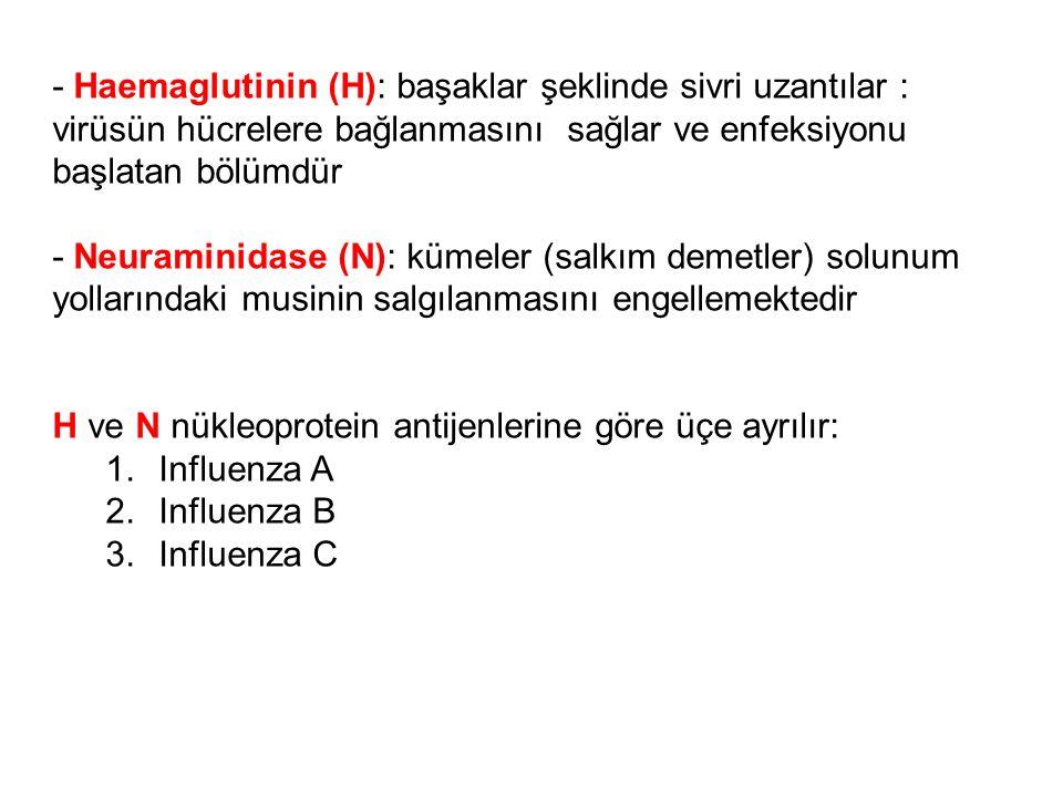 - Haemaglutinin (H): başaklar şeklinde sivri uzantılar : virüsün hücrelere bağlanmasını sağlar ve enfeksiyonu başlatan bölümdür - Neuraminidase (N): k