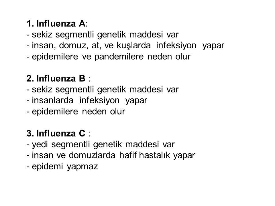 1. Influenza A: - sekiz segmentli genetik maddesi var - insan, domuz, at, ve kuşlarda infeksiyon yapar - epidemilere ve pandemilere neden olur 2. Infl