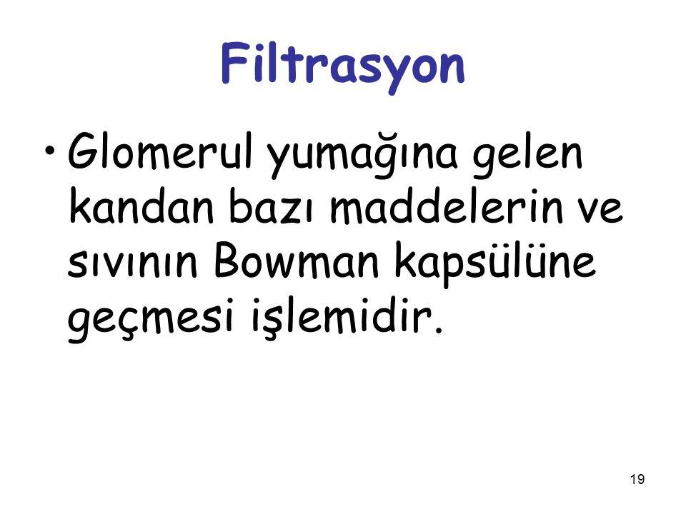 19 Filtrasyon Glomerul yumağına gelen kandan bazı maddelerin ve sıvının Bowman kapsülüne geçmesi işlemidir.