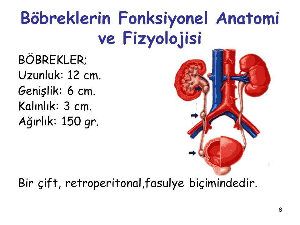6 Böbreklerin Fonksiyonel Anatomi ve Fizyolojisi BÖBREKLER; Uzunluk: 12 cm. Genişlik: 6 cm. Kalınlık: 3 cm. Ağırlık: 150 gr. Bir çift, retroperitonal,