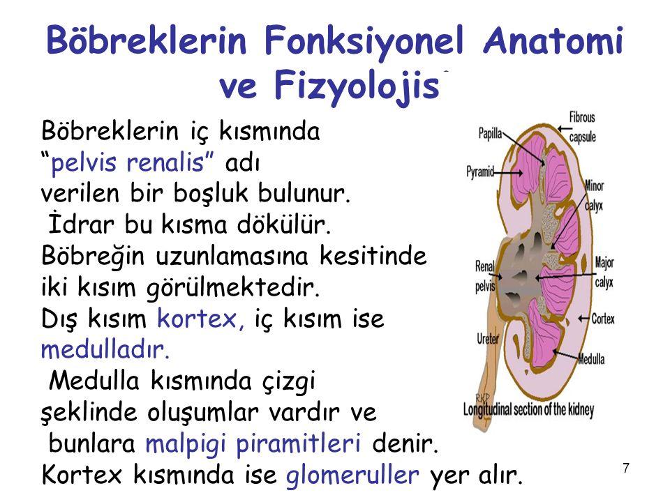 """7 Böbreklerin Fonksiyonel Anatomi ve Fizyolojisi Böbreklerin iç kısmında """"pelvis renalis"""" adı verilen bir boşluk bulunur. İdrar bu kısma dökülür. Böbr"""