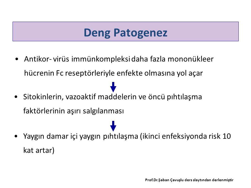 Deng Patogenez Antikor- virüs immünkompleksi daha fazla mononükleer hücrenin Fc reseptörleriyle enfekte olmasına yol açar Prof.Dr.Şaban Çavuşlu ders s