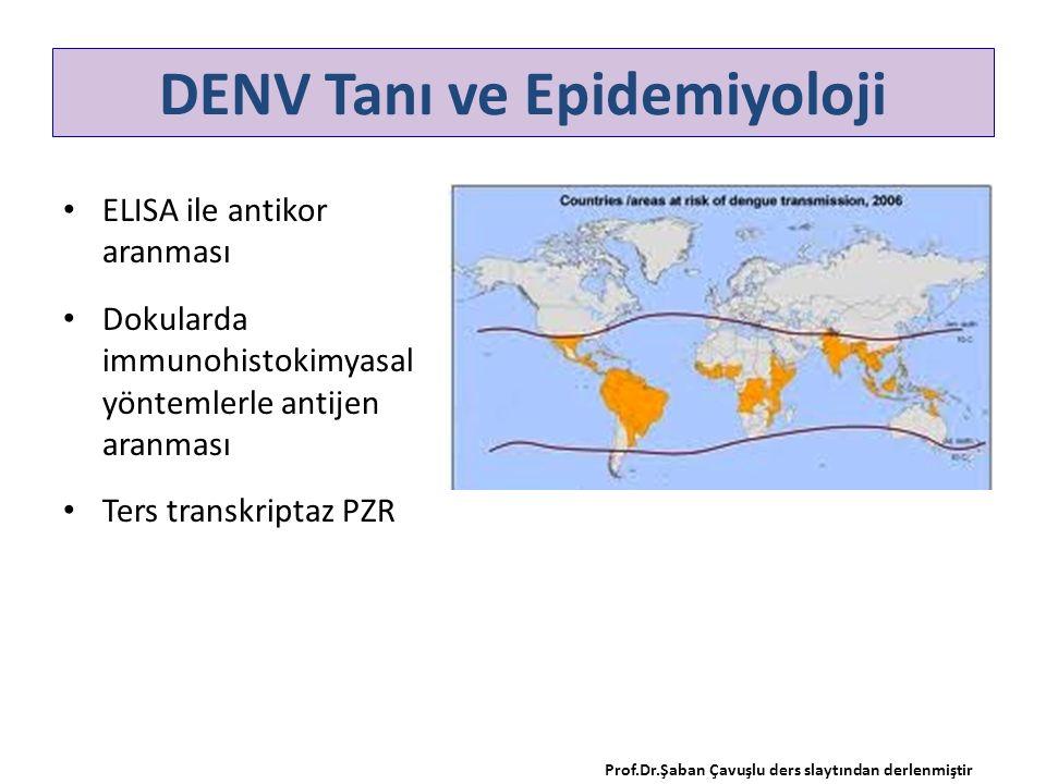 ELISA ile antikor aranması Dokularda immunohistokimyasal yöntemlerle antijen aranması Ters transkriptaz PZR DENV Tanı ve Epidemiyoloji Prof.Dr.Şaban Ç