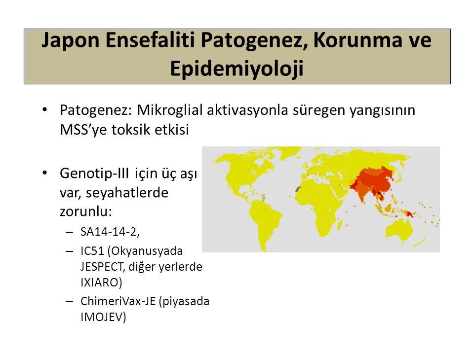 Japon Ensefaliti Patogenez, Korunma ve Epidemiyoloji Patogenez: Mikroglial aktivasyonla süregen yangısının MSS'ye toksik etkisi Genotip-III için ü ç a