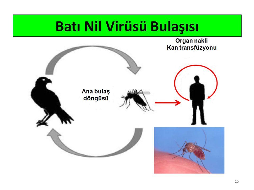 15 Batı Nil Virüsü Bulaşısı