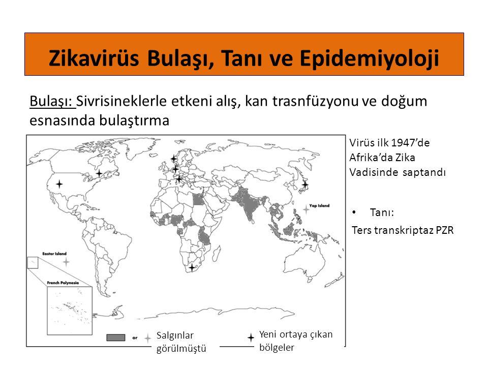 Bulaşı: Sivrisineklerle etkeni alış, kan trasnfüzyonu ve doğum esnasında bulaştırma Zikavirüs Bulaşı, Tanı ve Epidemiyoloji Virüs ilk 1947'de Afrika'd