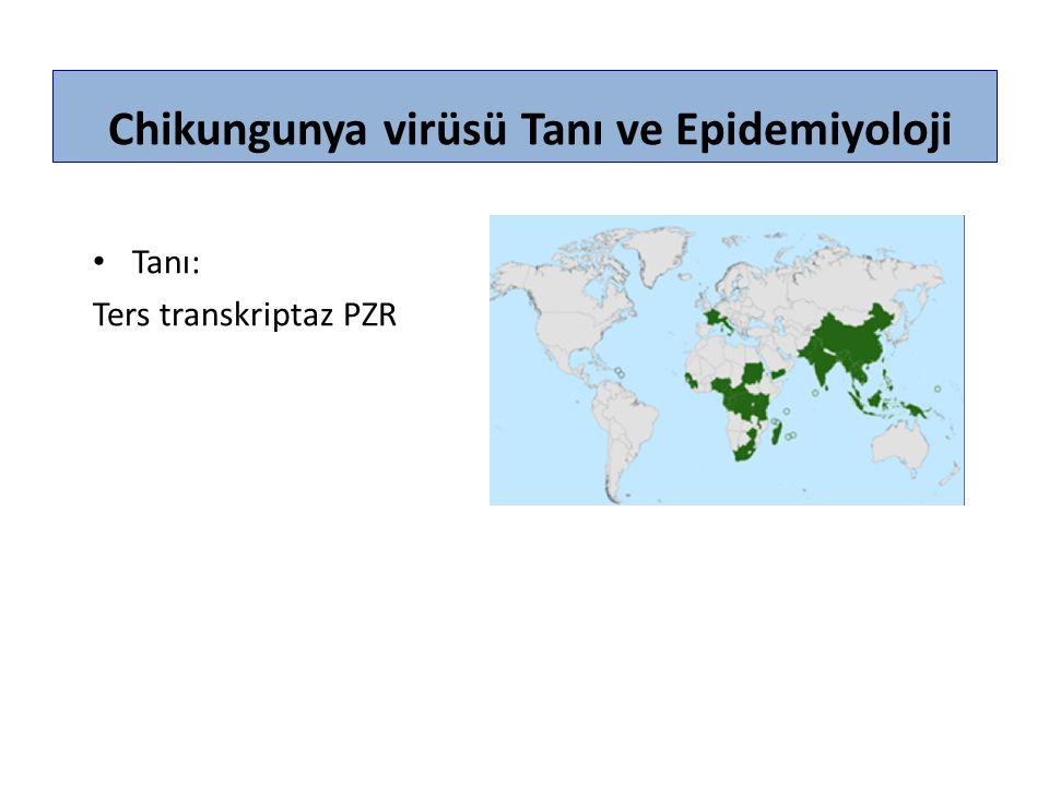 Chikungunya virüsü Tanı ve Epidemiyoloji Tanı: Ters transkriptaz PZR