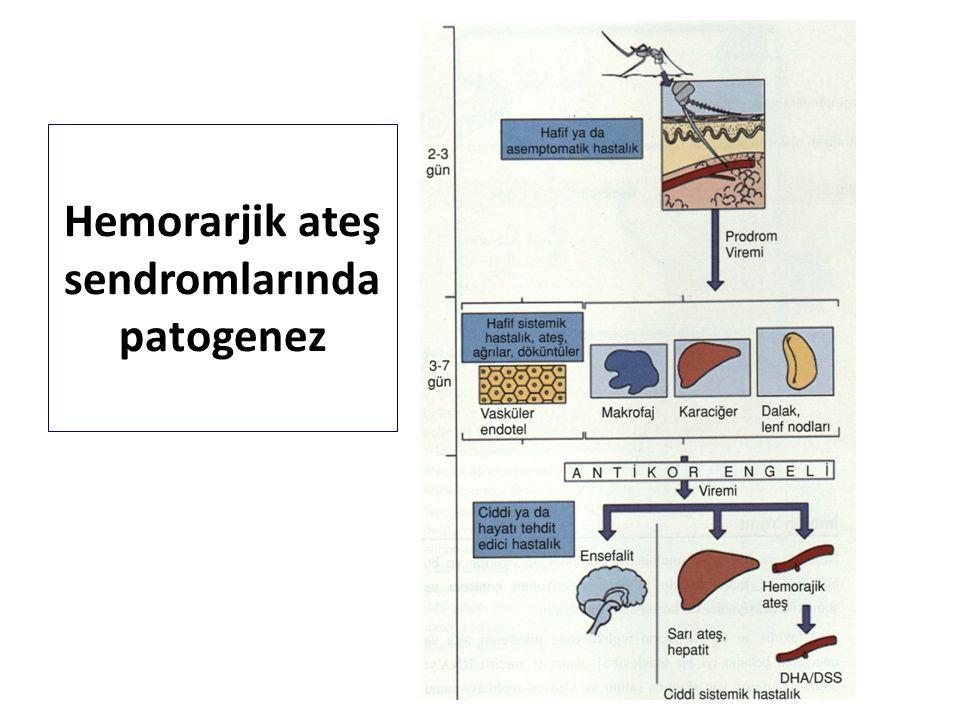 ● Kanama (hemoraji): Her organda kapiller ve arteriol endotellerinde şişme, burun kanaması, diş eti kanaması, cilt altı kanama, iç organlarda kanama, kapiller hasarlanma sonucu yaygın kanama, şok ve ölüm.