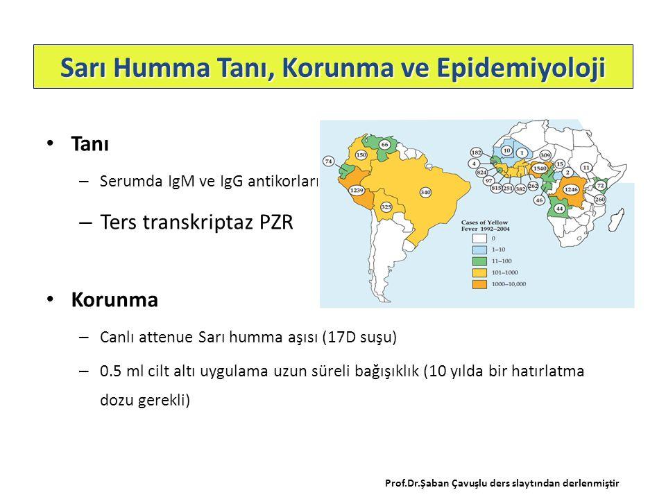 Tanı – Serumda IgM ve IgG antikorları – Ters transkriptaz PZR Korunma – Canlı attenue Sarı humma aşısı (17D suşu) – 0.5 ml cilt altı uygulama uzun sür